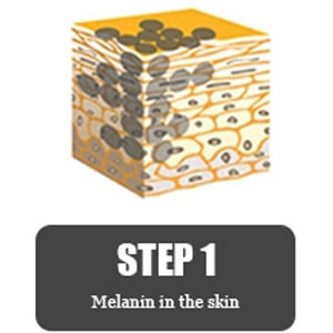 Melanin In The Skin